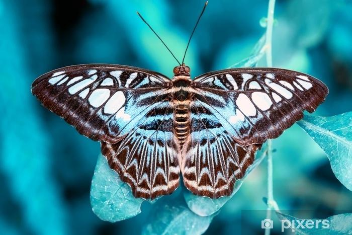 Papier peint vinyle Closeup beau papillon et fleur dans le jardin. - Animaux