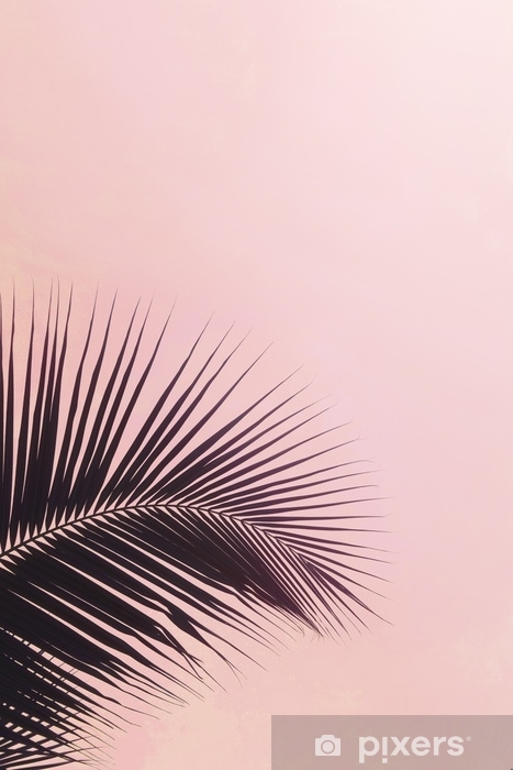 Fototapeta samoprzylepna Jedna sylwetka liści palmowych na różowym kolorze nieba. twórczy minimalizm. copyspace dla tekstu - Rośliny i kwiaty