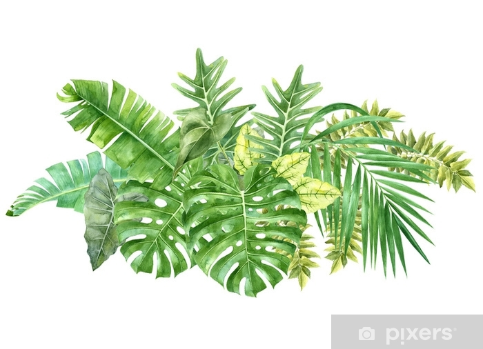 Tropical Border With Watercolor Jungle Leaves Sticker Pixers We Live To Change Free delivery and returns on ebay plus items for plus members. tropical border with watercolor jungle leaves sticker pixers we live to change