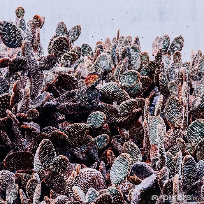 Fototapeta winylowa Kaktus w mieście. miłośników minimalizmu kaktusów - Rośliny i kwiaty
