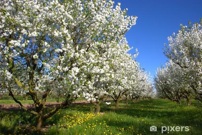 Vinilo Pixerstick Florecimiento del manzano - Manzanos