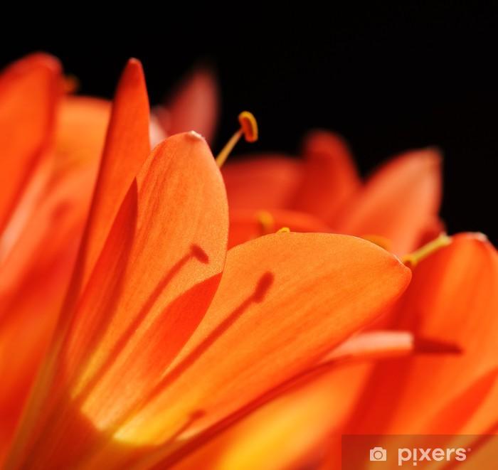 Papier peint vinyle Clivia fleur tropicale macro - Fleurs