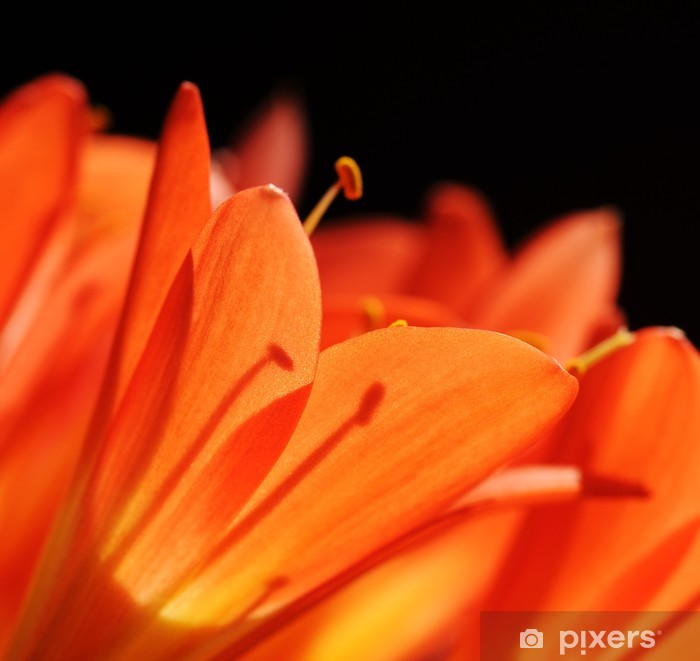 Sticker Pixerstick Clivia fleur tropicale macro - Fleurs