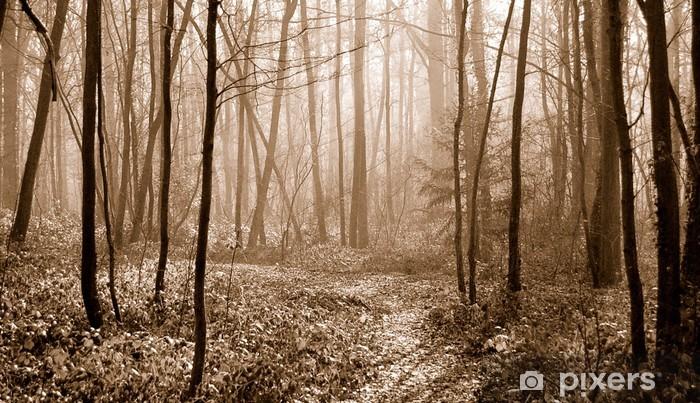 Fototapeta winylowa Forêt sepia - Inne uczucia
