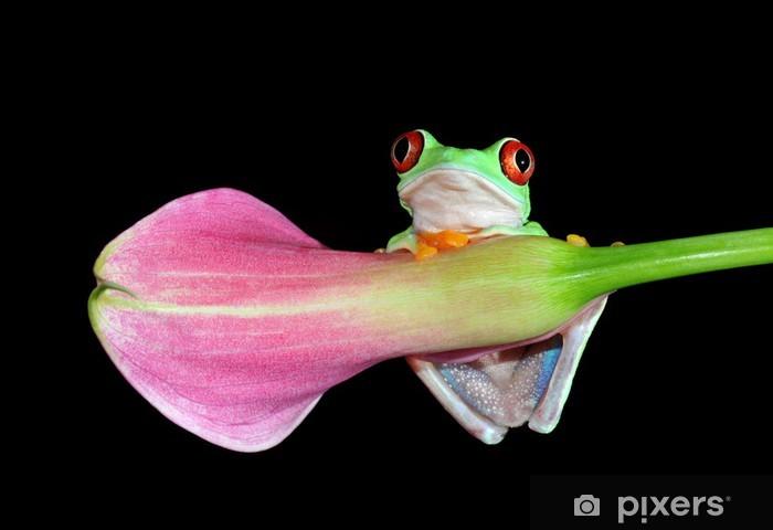 Carta da Parati in Vinile Rosso eyed tree frog sul fiore - Altri Altri