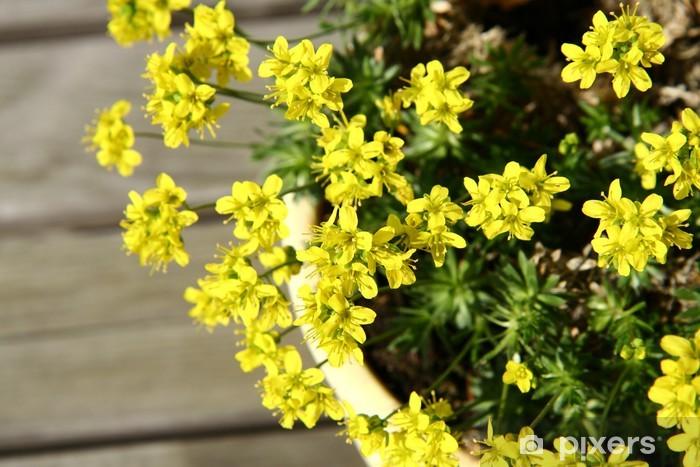 Fiori Piccoli Gialli.Carta Da Parati Piccoli Fiori Gialli Di Primavera In Una Pentola