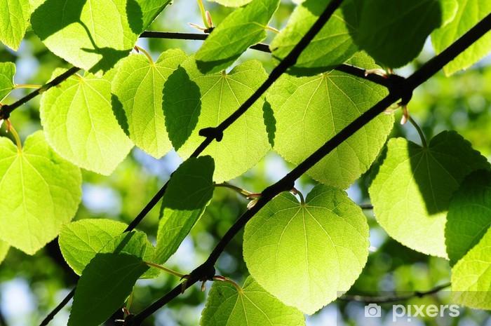 Fototapeta winylowa Foglie - Drzewa