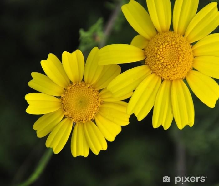 Papier peint vinyle Marguerites jaunes - Bonheur