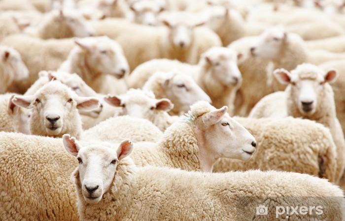 Papier peint vinyle Troupeau de moutons - Mammifères