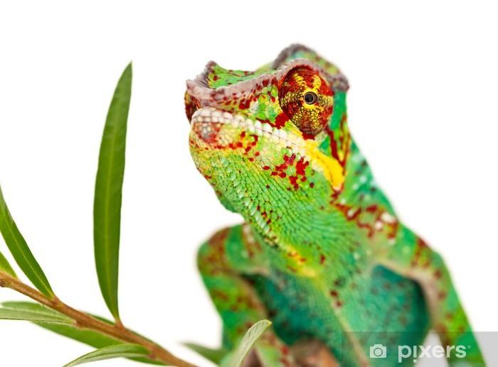 Naklejka Pixerstick Kameleon Reunion na białym tle - Tematy
