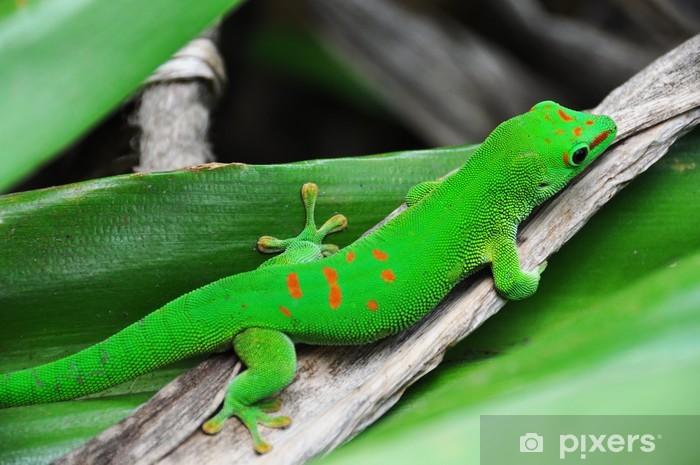 Vinilo Pixerstick Madagascar días gecko - Temas