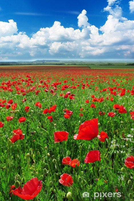 Greatest poppies meadow Vinyl Wall Mural - Themes