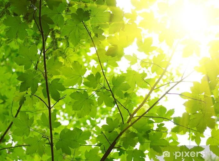 Papier Peint Autocollant Les feuilles vertes avec rayon de soleil - Thèmes