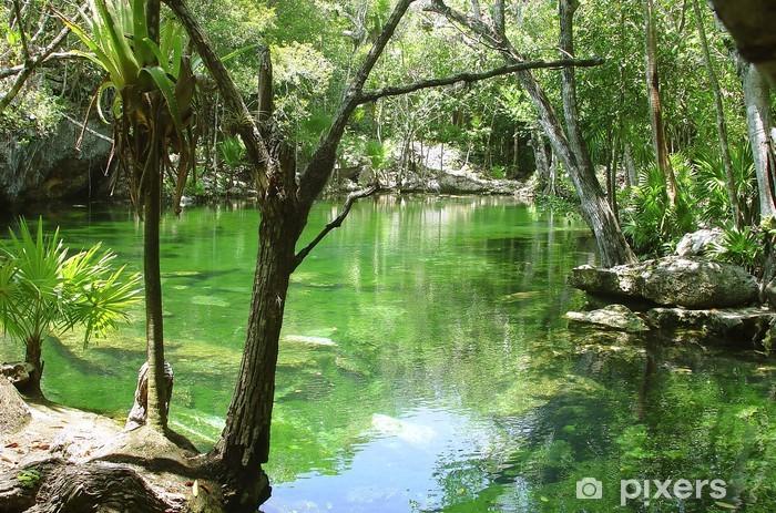 Papier peint vinyle Cenote Riviera Maya jungle maya Quintana Roo - Amérique