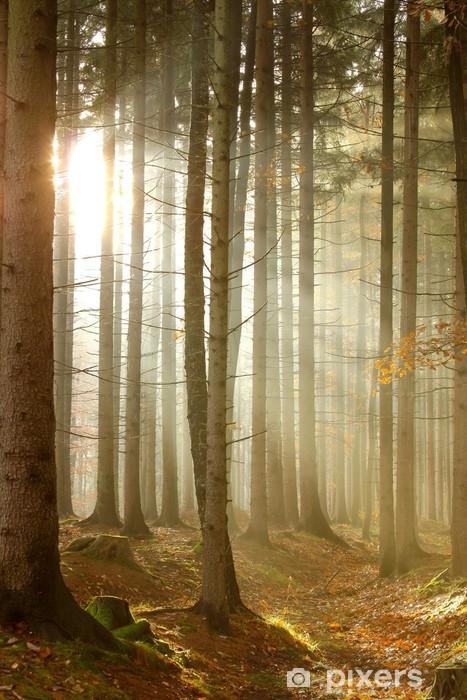 Pixerstick Sticker Magic zonnestralen door de bomen in de herfst bos - Bossen