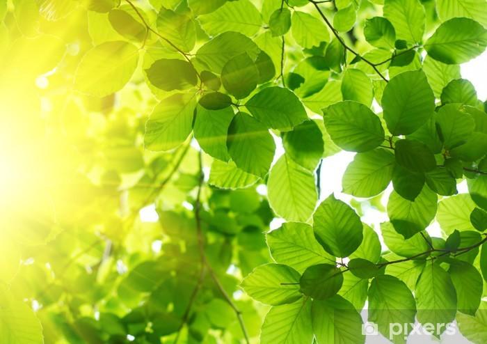 Sticker Pixerstick Les feuilles vertes avec rayon de soleil - Thèmes