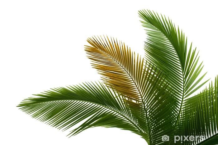 Papier peint vinyle Les feuilles de palmier - Arbres et feuilles