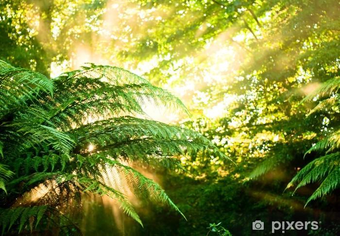 Morgen sol i en tåget regnskov Vinyl fototapet - Planter