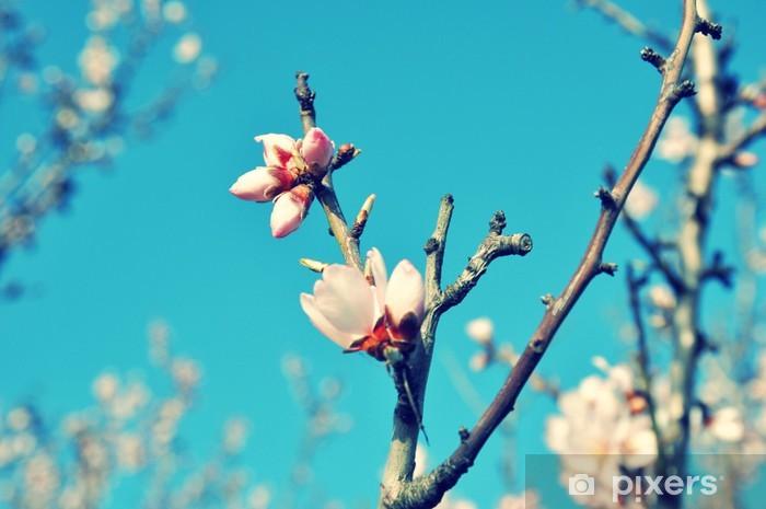 Vinyl-Fototapete Frühling blüht gegen blauen Himmel - Jahreszeiten