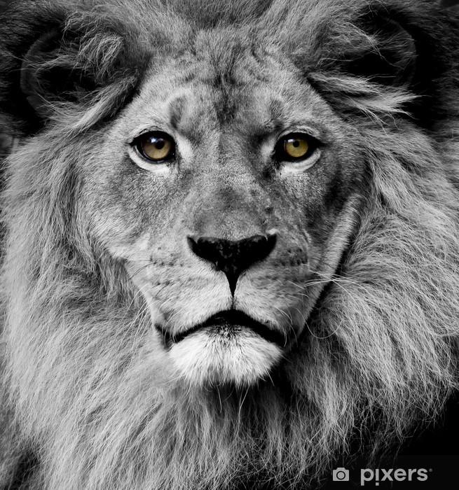 Lion eyes Vinyl Wall Mural -