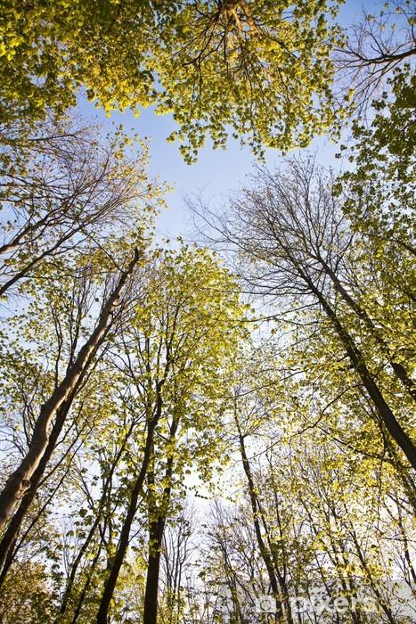 Sticker Pixerstick Couronne de l'arbre avec des feuilles colorées - Saisons