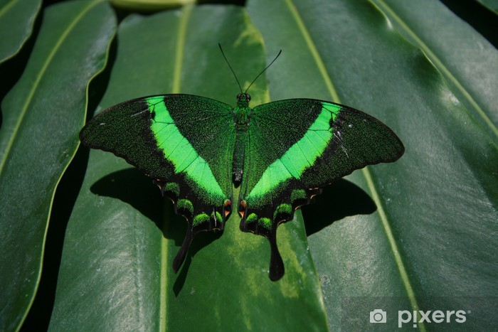 Fototapeta winylowa Zielony motyl - Natura i dzicz