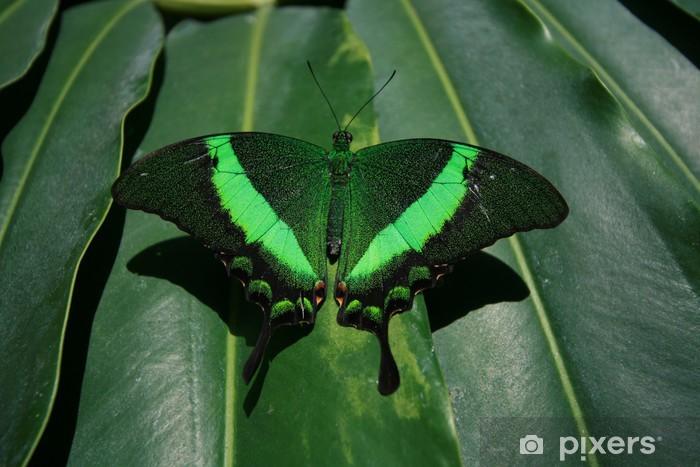 Nálepka Pixerstick Zelený motýl - Příroda a divočina