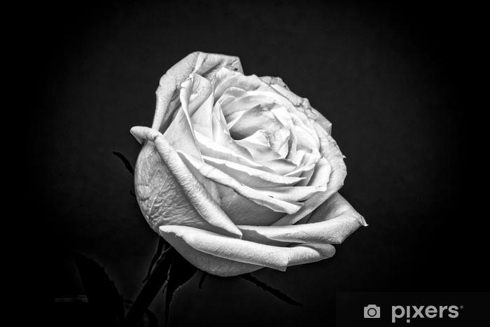 Adesivo Rosa Bianca Su Sfondo Nero Pixers Viviamo Per Il