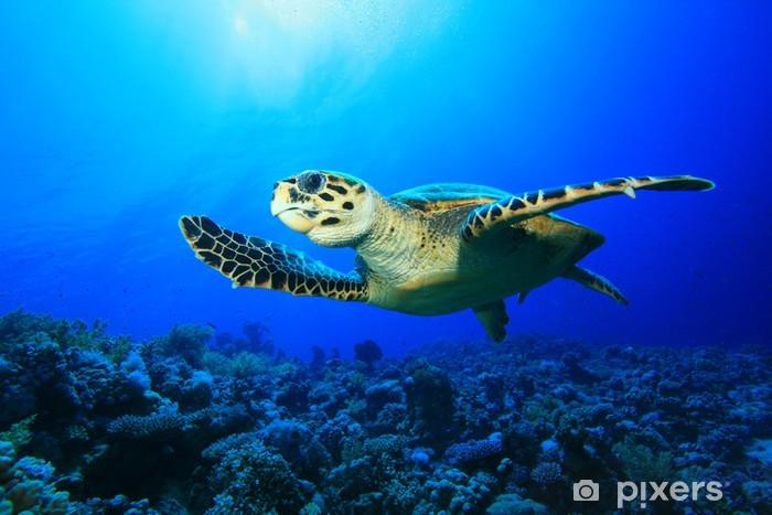 Vinyl Fotobehang Sea turtle - Andere Andere