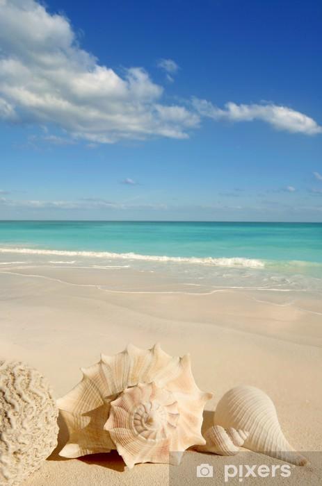 Zelfklevend Fotobehang Schelpen zeester tropische turkooise Caraïben - Amerika