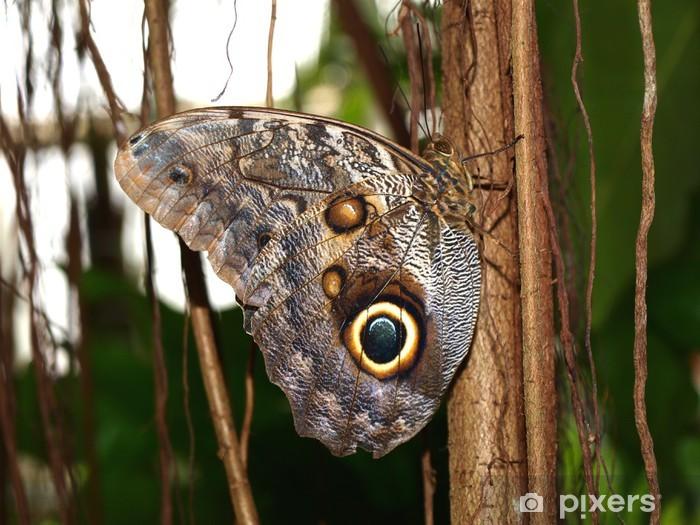 Vinyl-Fototapete Exotischer Schmetterling im regen Wald - Andere Andere