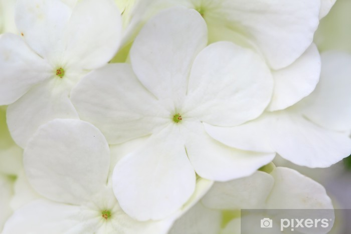 White Hydrangea Pixerstick Sticker - Plants