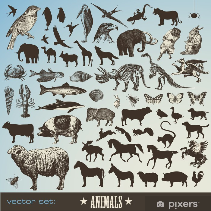 9477e7fd2221 Vinilo Conjunto de 60 ilustraciones de animales detallados y siluetas de  animales Pixerstick