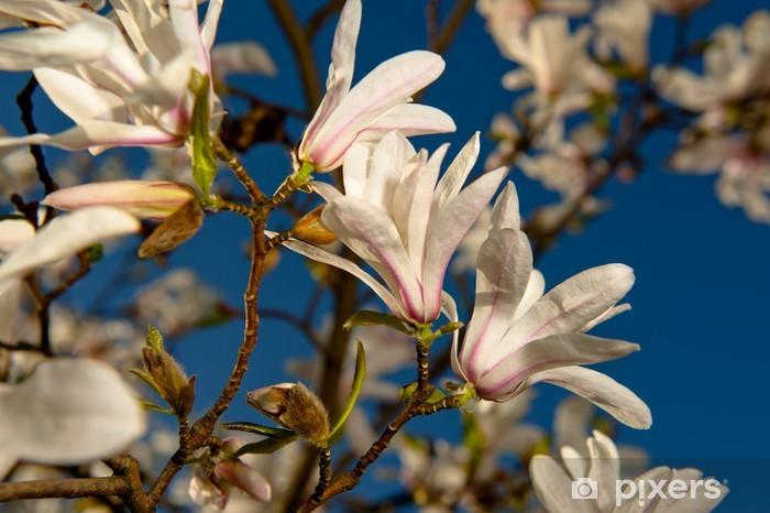 Fototapeta winylowa Magnolia - Kwiaty