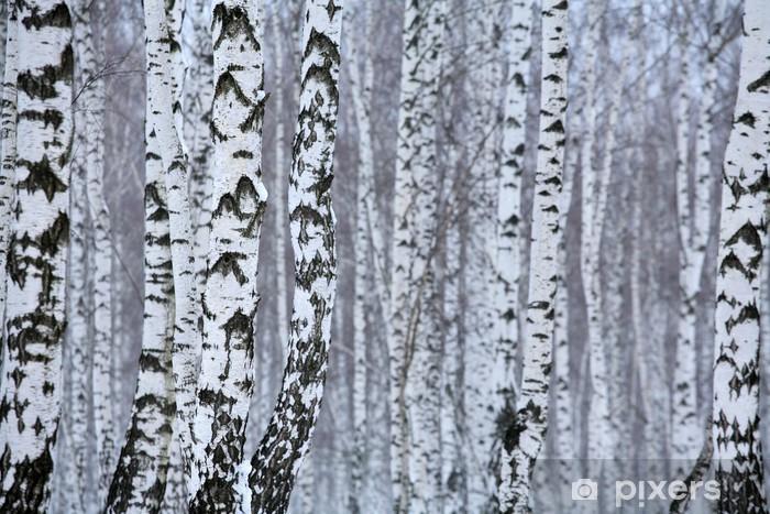 Papier peint vinyle Bois de bouleau en hiver - Styles