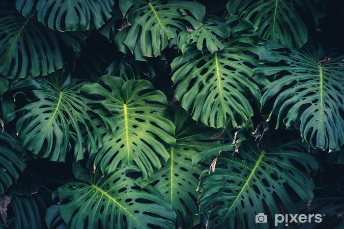 Fototapeta samoprzylepna Monstera philodendron leaves - roślina tropikalna - Rośliny i kwiaty