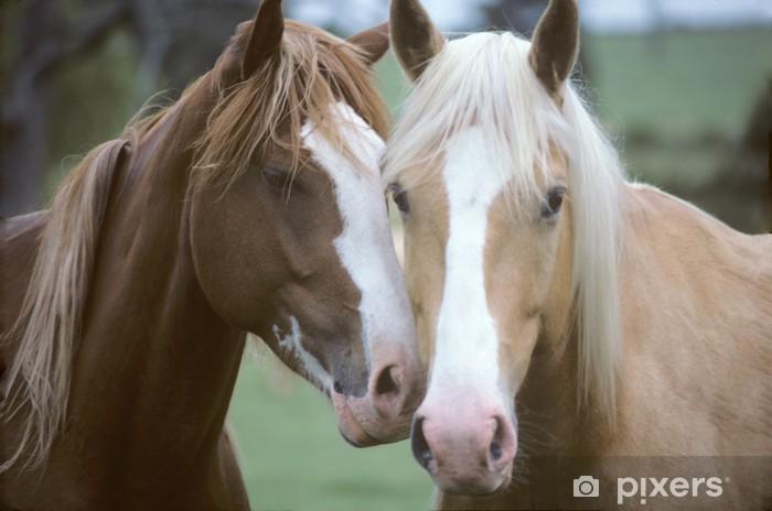 Naklejka Pixerstick Dwa konie kochający - Tematy