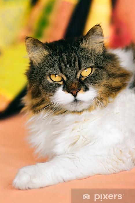 Nálepka Pixerstick Kříženec sibiřský a perská kočka. - Témata