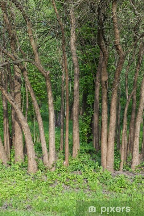 Fototapeta Winylowa Wiersz Z Pni Drzew Z Zielona Trawa I Las Ciemnym