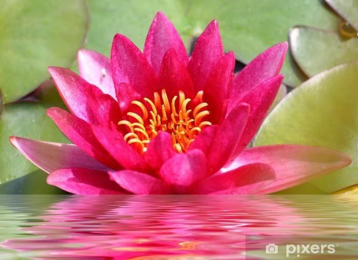 Naklejka Pixerstick Nenufar - Kwiaty