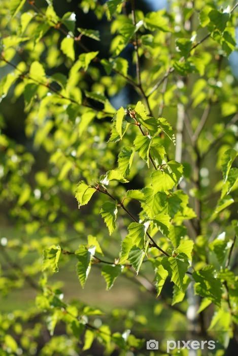 Vinyl-Fototapete Blätter einer Birke - Wasser