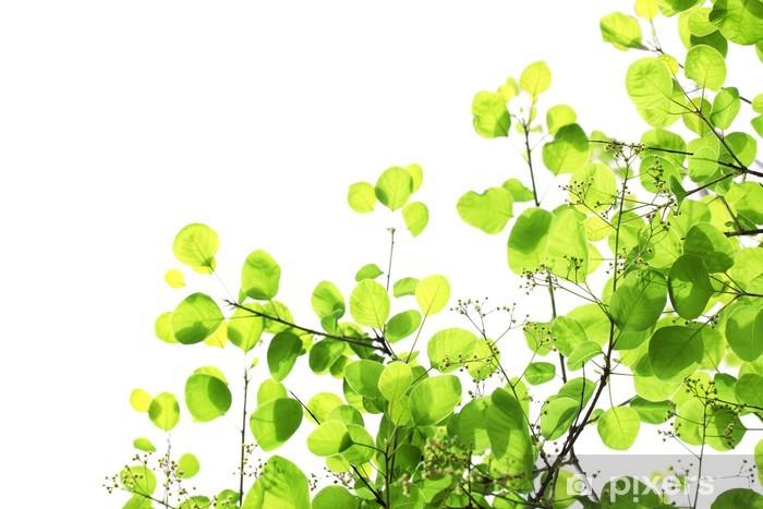 Zelfklevend Fotobehang Verse groene bladeren over wit - Huis en Tuin