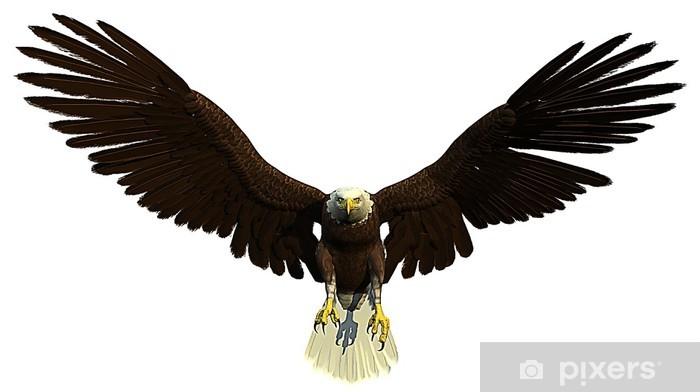 Fotomural Frente águila calva americana • Pixers® - Vivimos para cambiar