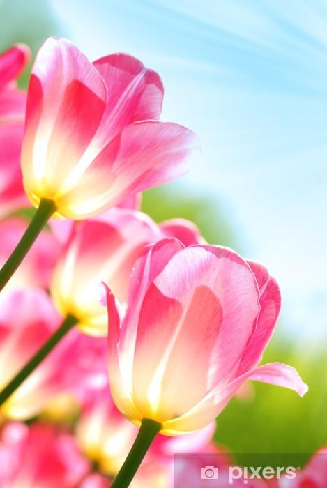 Fototapeta winylowa Zbliżenie tulipanów - Święta międzynarodowe