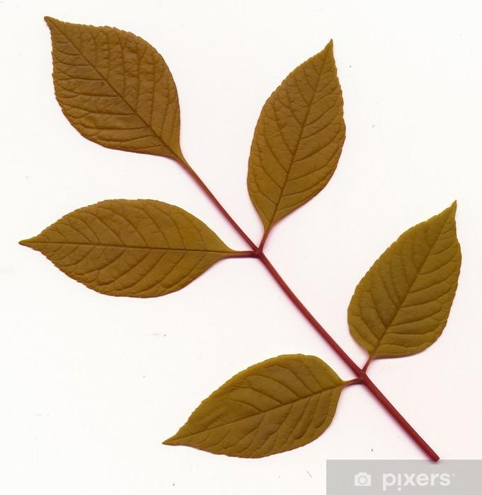 Papier peint vinyle Motif de feuilles de frêne - Textures
