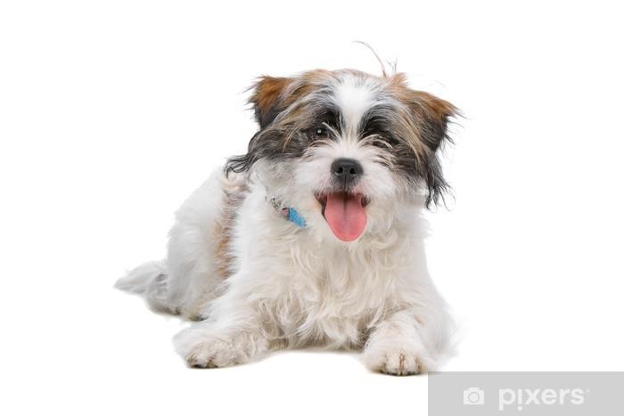 fotobehang gemengd ras boomer hond geïsoleerd op wit • pixers® - we