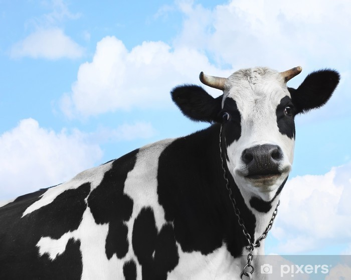 Cow Vinyl Wall Mural - Agriculture