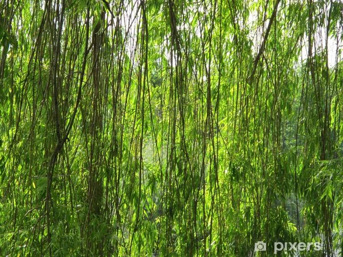 Fototapeta winylowa Płacz wierzby - Drzewa