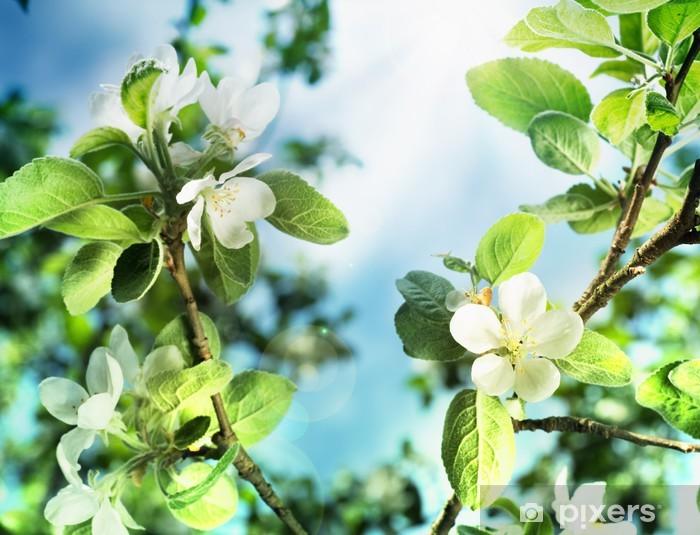 Pixerstick Aufkleber Frühling Apfelblüte über blauen Himmel - Jahreszeiten