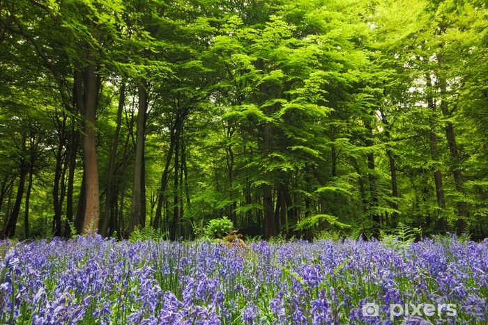 Vinilo para Nevera Bluebells en un bosque de compensación - Árboles